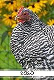 Terminplaner 2020 - Hühner | Terminkalender mit Monats- und Jahresübersicht