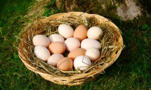 Zwerghühner, Hühnereier im Korb, Eierschalenfarbe braun, weiß, grün, creme, hellbraun, dunkelbraun, schokobraun