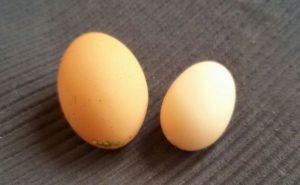 großes und kleines Hühnerei, Größe von Zwerghühnereiern