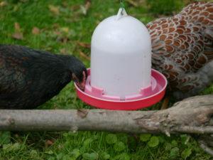 Haltung von Zwerghühnern, Zeitbedarf für die Pflege, Grundlagen Zwerghuhnhaltung