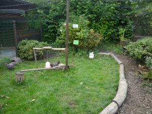 Platzbedarf für die Anschaffung von Hühnern, gut strukturierter Auslauf, Grundlagen zu Zwerghühnern im Garten
