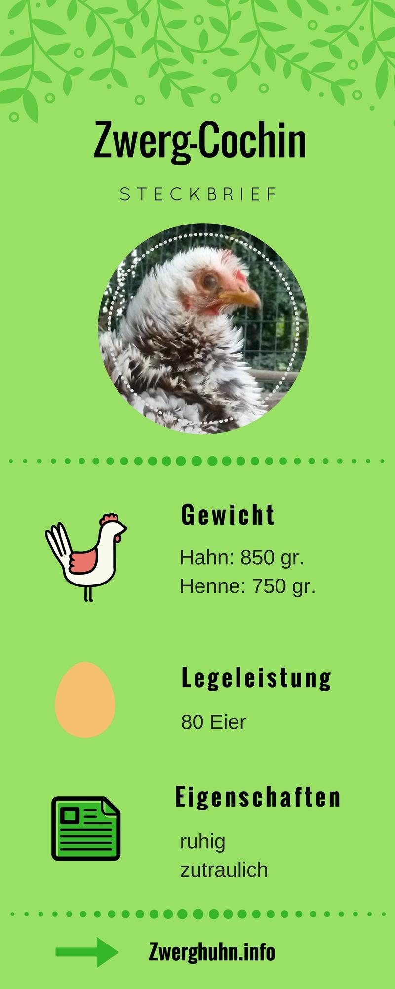 Zwergcochin Steckbrief, Legeleistung, Eigenschaften und Rassemerkmale, Zwerghühner