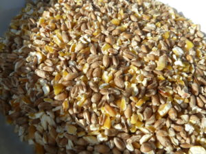 Schrotfutter / Körnerfutter, Bestandteile von Hühnerfutter, Zwerghühner richtig füttern