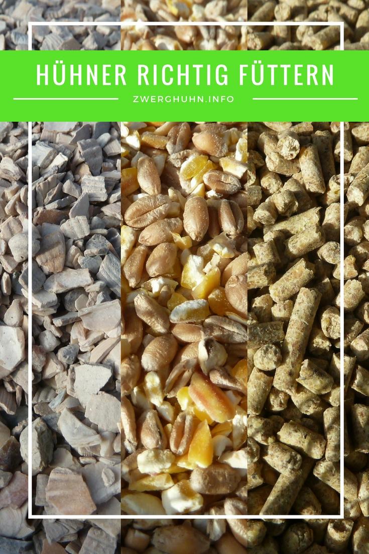 Zwerghhühner richtig füttern, wichtige Futterbestandteile Legemehl Körner Muschelkalk Grit