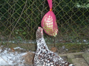 Futternetz für Hühner als Beschäftigungsmöglichkeit in der Hühnerhaltung