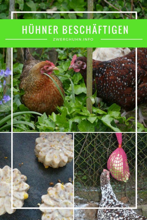 Zwerghühner richtig beschäftigen bei Stallpflicht oder Langeweile, Beschäftigungsmöglichkeiten für Hühner, Hühnerknödel, Futterball, Spagettibaum, Futternetz, Körnersuche
