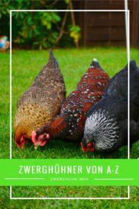 Zwerghühner Rassen von A-Z