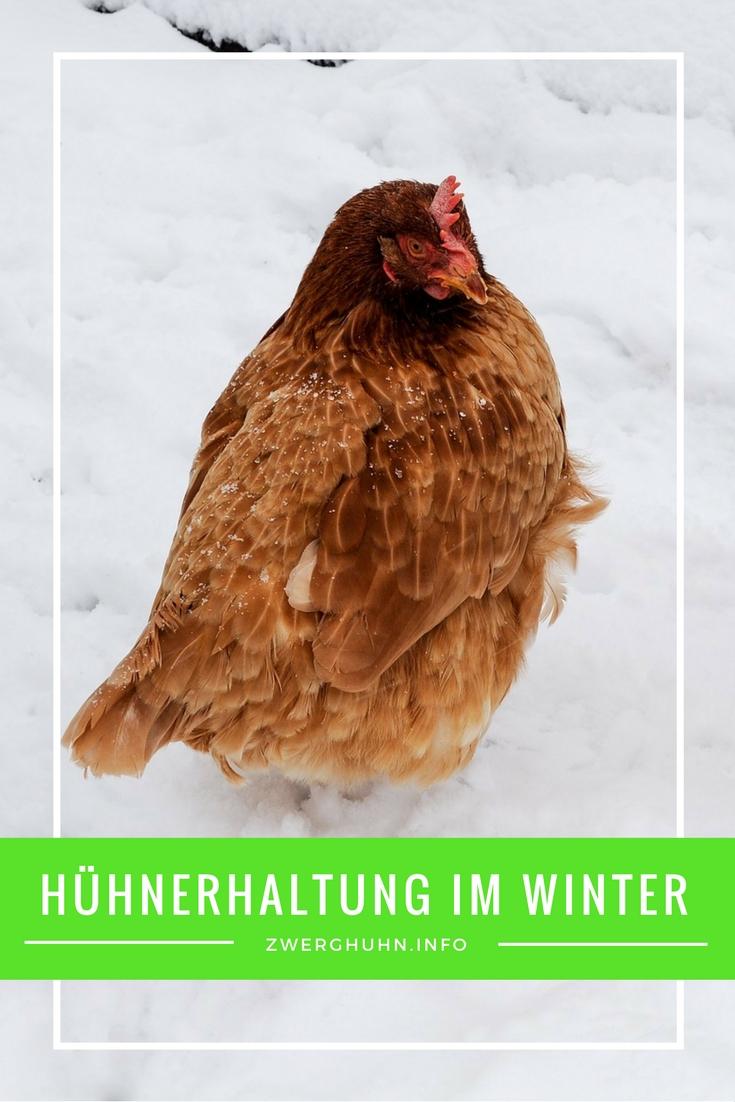Hühner im Winter , Hühnerstall winterfest machen