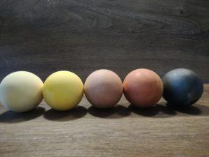 gefärbte Ostereier, grün, gelb, rot, orange, blau