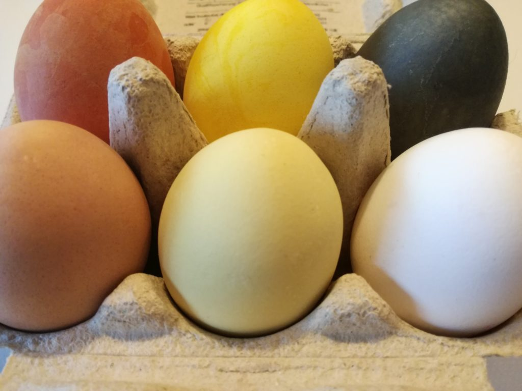 Ostern mit selbst gefärbten Eiern, gelb, grün, orange, rot, blau