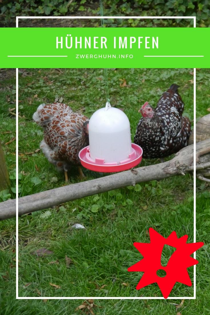 Hühner impfen, Trinkwasserimpfung , Newcastle Disease (ND) - atypische Geflügelpest