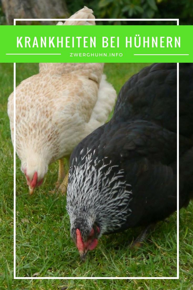 Krankheiten in der Hühnerhaltung,