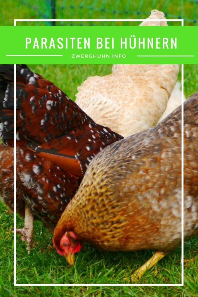 Parasiten in der Hühnerhaltung