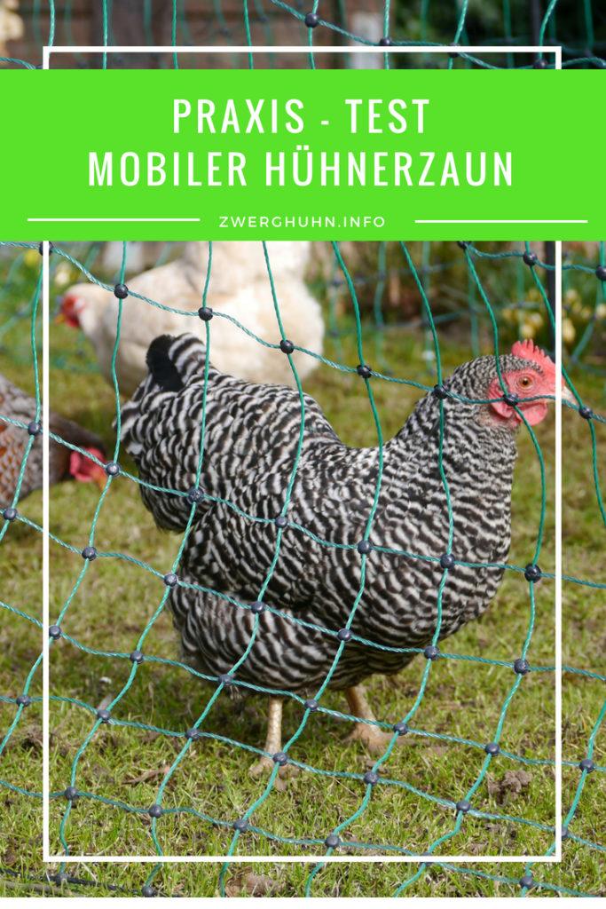 Mobiler Hühnerzaun im Praxis - Test