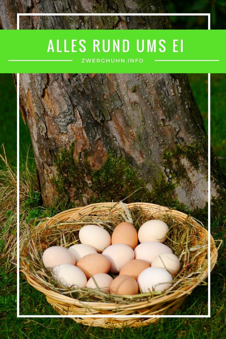 Wichtige Infos rund um das Thema Eier, Hühnerei, Ei