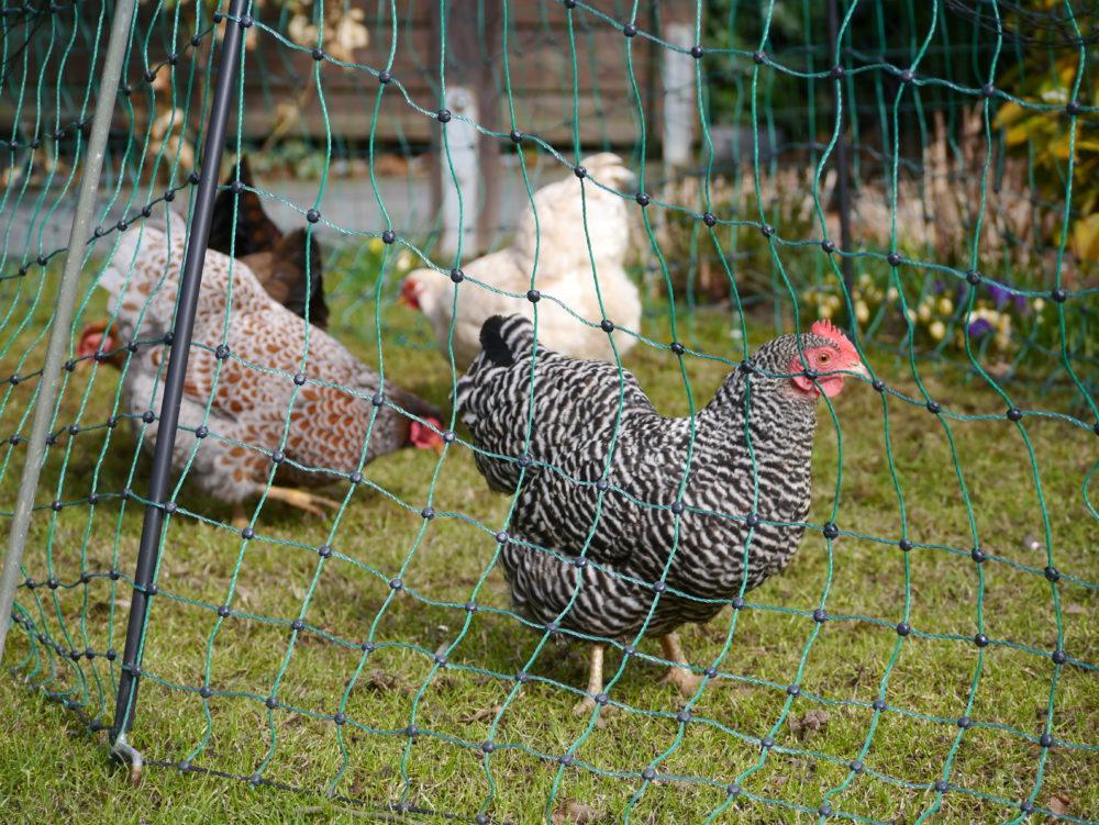 Mobiler Hühnerzaun, Geflügelzaun