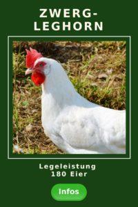 Zwerg-Leghorn