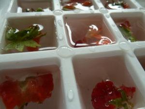gefrorene Früchte in Eiswürfeln gegen Überhitzung von Hühnern im Sommer bei hohen Temperaturen